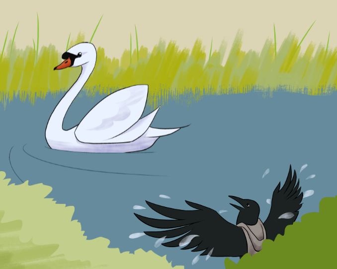 An illustration of a crow, awkwardly flapping around in a pond while a beautiful swan swims past.